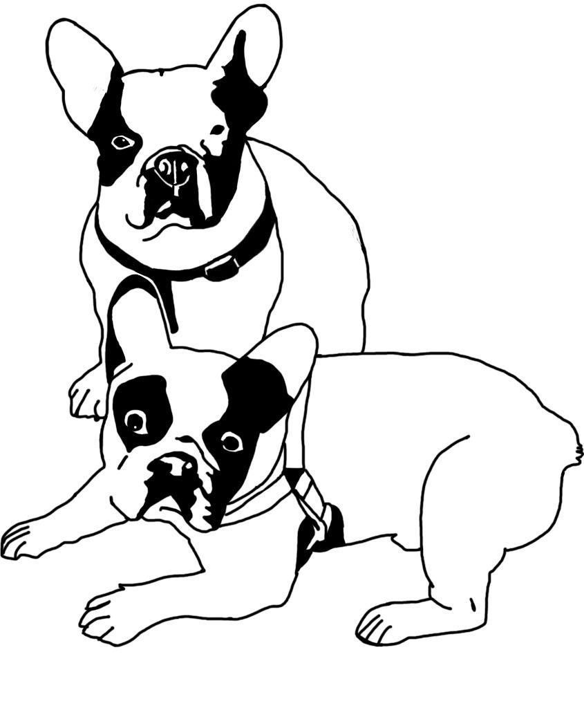 bulldog frances camiseta diseño maldacp dibujo